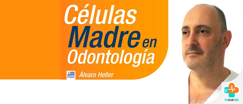 Celulas madre en odontologia