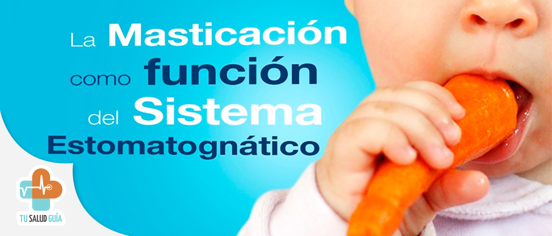 La masticacion como funcion del sistema estomatonatico