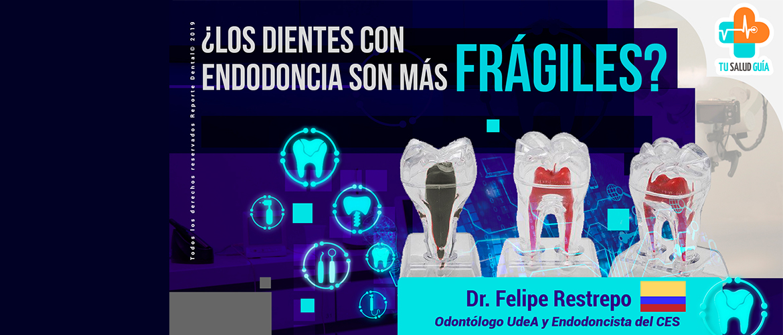 Los dientes con endodoncia son mas fragiles